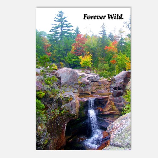 Forever Wild Waterfall Postcards (Package of 8)