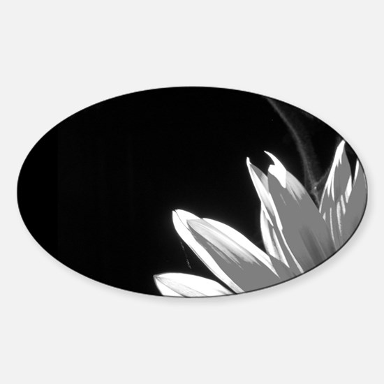 Black & White C Sunflower Oval Decal