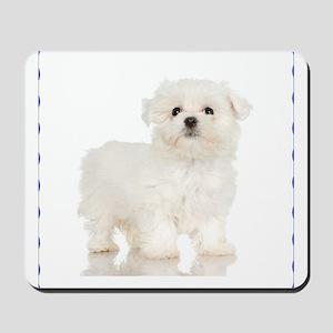 Maltese Puppy Mousepad