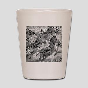 Zebras running Shot Glass