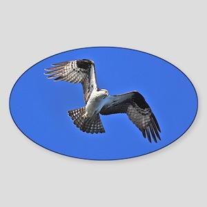 Osprey Oval Sticker