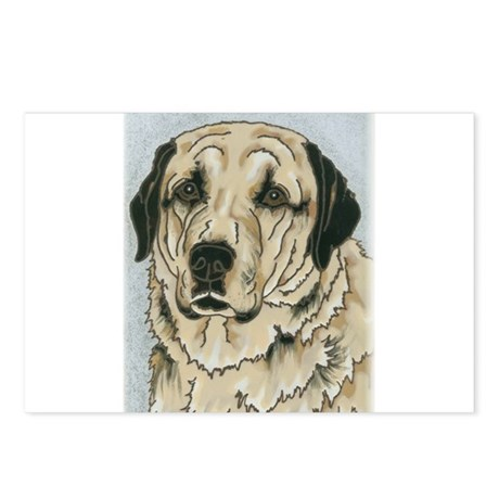 Anatolian Shepherd Dog Postcards (Package of 8)