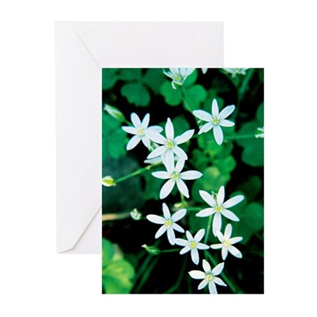 Wildflowers - Greeting Cards (Pk of 20)