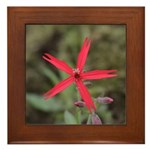 Fire Pink Framed Tile