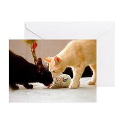 Latte Kitties Greeting Cards (Pk of 20)