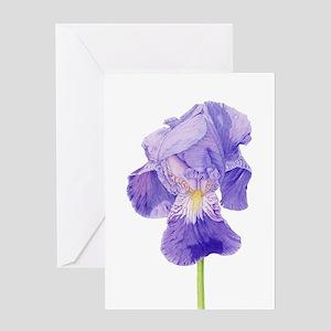 Pencil drawing greeting cards cafepress purple iris greeting card m4hsunfo