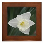 White Daffodil Framed Tile