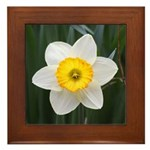 Yellow and White Daffodil Framed Tile