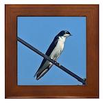 Tree Swallow Framed Tile