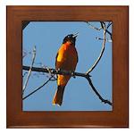Baltimore Oriole Framed Tile