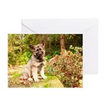 2019 Shiloh Puppy Greeting Cards (Pk of 10)