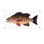 Gray Mangrove Snapper v2 Banner