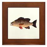 Gray Mangrove Snapper v2 Framed Tile