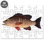 Gray Mangrove Snapper v2 Puzzle