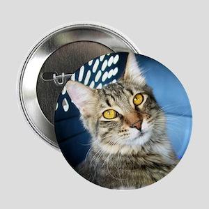Tabby Cat Button