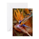 Birds of Paradise Flower Greeting Cards (Pk of 10)