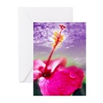 Hibiscus Flower Greeting Cards (Pk of 10)