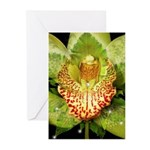 Green Orchid Greeting Cards (Pk of 10)