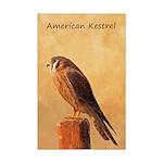 American Kestrel Mini Poster Print