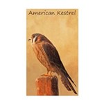 American Kestrel Sticker (Rectangle 10 pk)