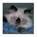 Blue-Eyed Himalayan Kitten Tile Coaster