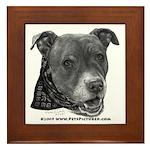 Roxy, Pit Bull Terrier Framed Tile