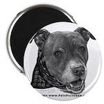Roxy, Pit Bull Terrier Magnet