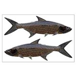 Abstract Line Tarpon Posters