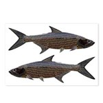 Abstract Line Tarpon Postcards (Package of 8)