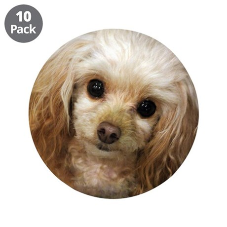 "Poodle 3.5"" Button (10 pack)"