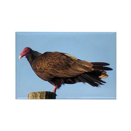 Turkey Vulture Rectangle Magnet (10 pack)
