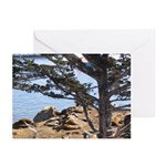 Sea Lions Greeting Cards (Pk of 20)