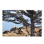 Sea Lions Postcards (Package of 8)