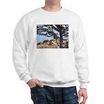Sea Lions Sweatshirt