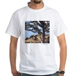 Sea Lions White T-Shirt