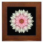 Pink and White Dahlia I Framed Tile