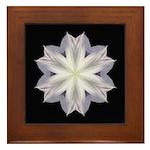Clematis I Framed Tile