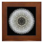 Dandelion Head I Framed Tile