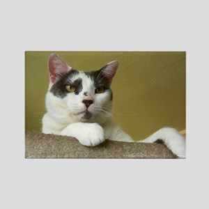 Grey & White Cat Rectangle Magnet