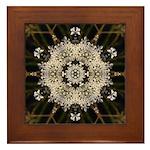 Queen Annes Lace I Framed Tile