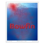 Blood in the Water (bowfin poster)
