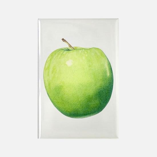 Green Apple Rectangle Magnet (10 pack)