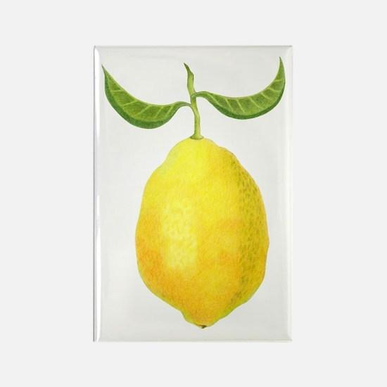 Lemon Rectangle Magnet (10 pack)