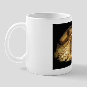 Baby Sulcata Tortoise Mug Mugs