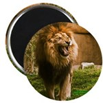 """King of the Jungle 2.25"""" Magnet (10 pack)"""
