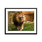 King of the Jungle Framed Panel Print