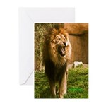 King of the Jungle Greeting Cards (Pk of 20)