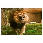 King of the Jungle Large Poster