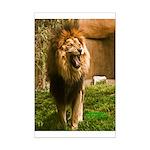 King of the Jungle Mini Poster Print