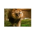 King of the Jungle Rectangle Magnet (10 pack)